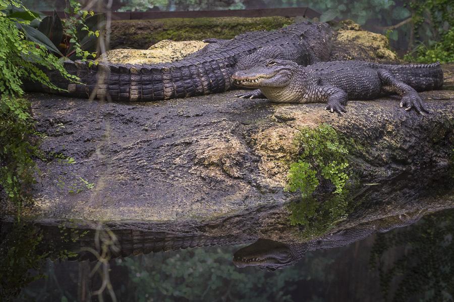 Reptilien mit Fokus Peaking aufgenommen im Zoo Leipzig
