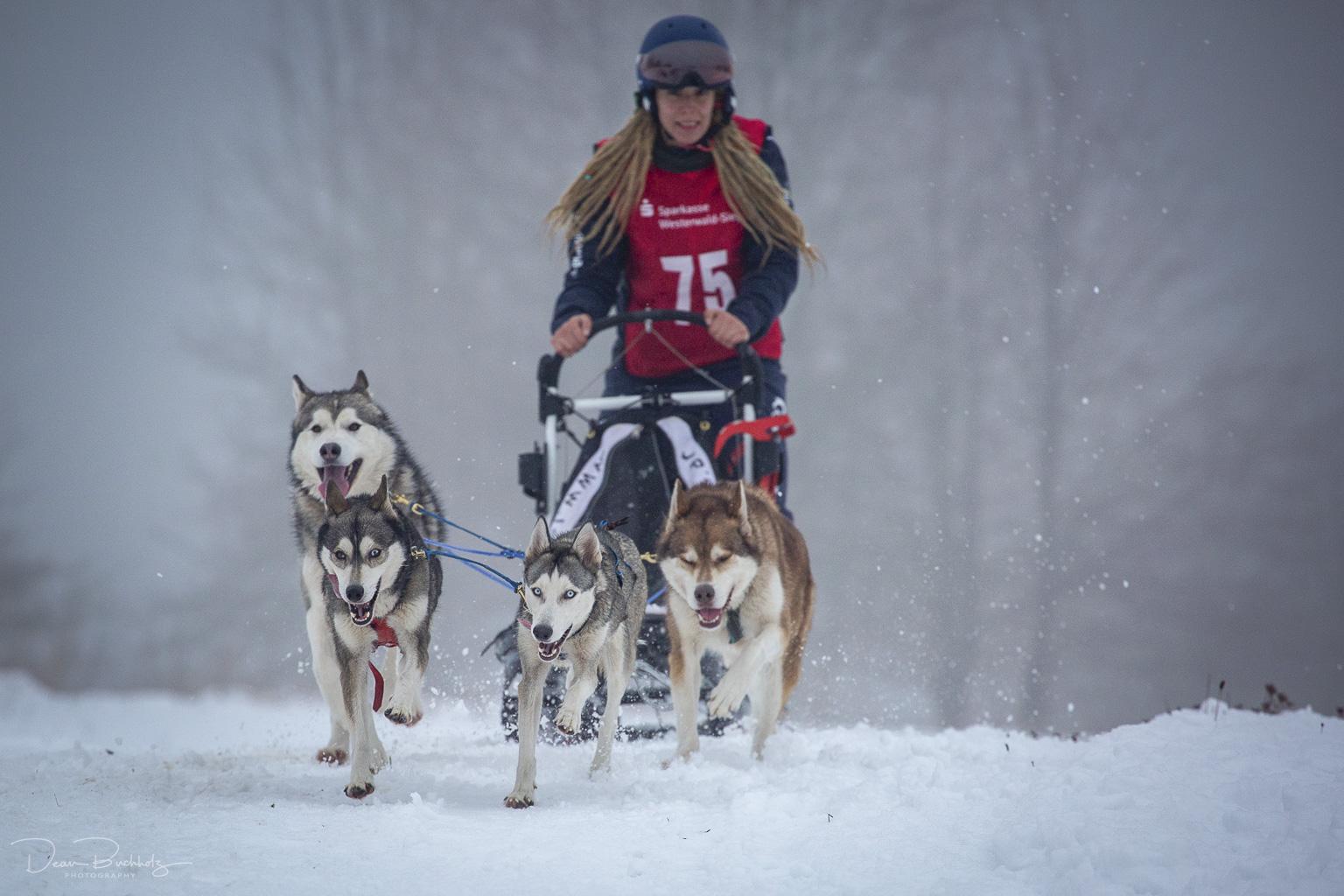 Schlittenhunderennen in Liebenscheid 2019