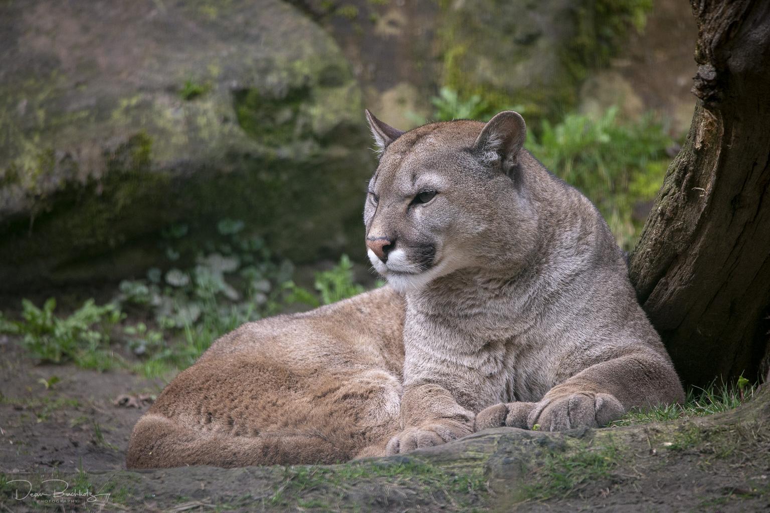 Tierpark Stroehen 24.03.2019