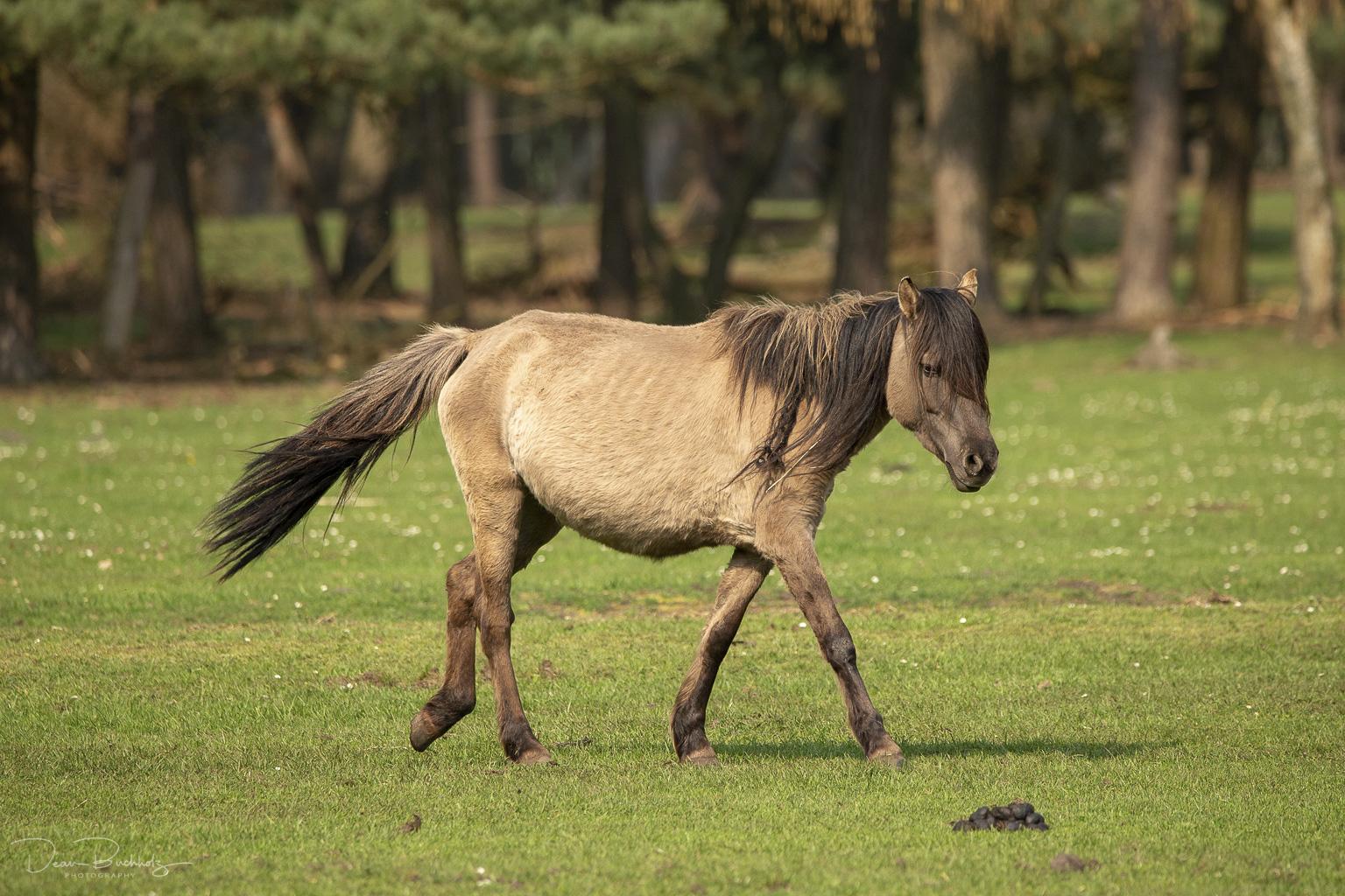 Fototreffen Fotofreunde Münsterland bei den Wildpferden