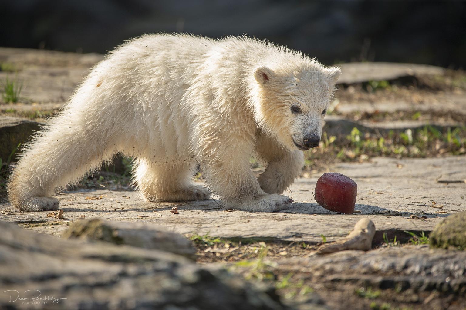 Zoo Tierpark Berlin vom 06.04.2019