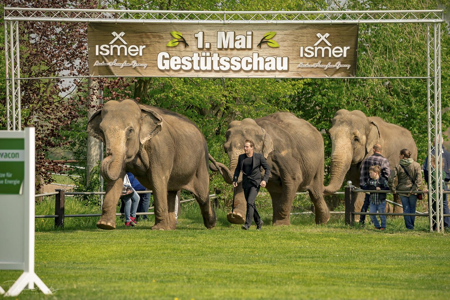 Tierpark Stroehen und Gestütschau vom 01.05.2019